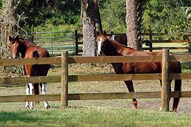 StarBrite Stables: Rene and Irish
