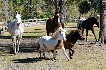 StarBrite Stables: Large and small horses running together